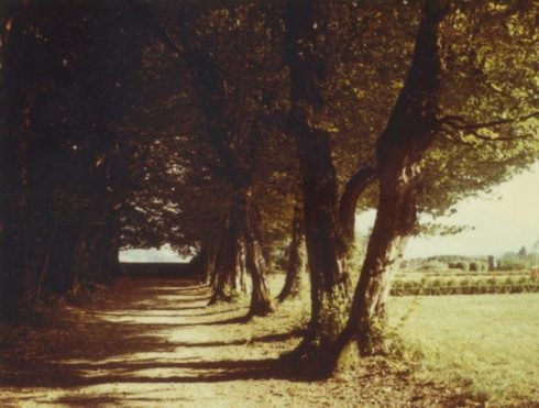 The tree-covered walk at La Cour, where Anne and her siblings liked to play.